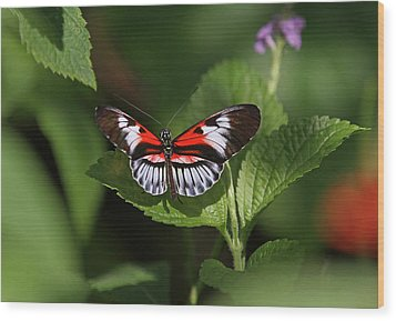Piano Key Butterfly Wood Print by Juergen Roth
