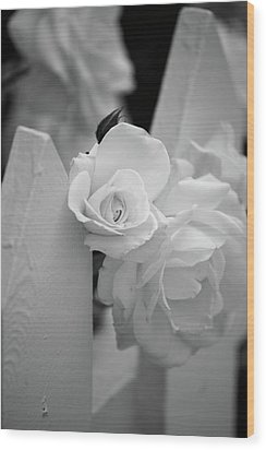 Picket Rose Wood Print by Peter Tellone