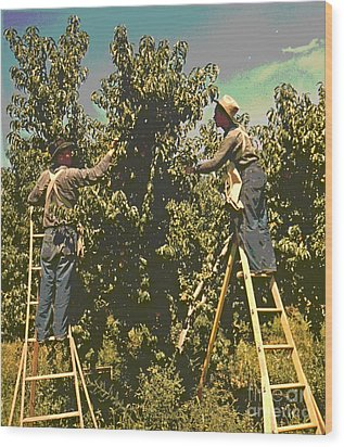 Picking Peaches Wood Print by Padre Art
