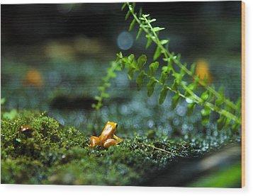 Pico Wood Print