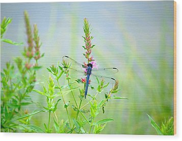 Wood Print featuring the photograph Picture Perfect Skimmer Dragonfly by Mary McAvoy