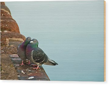 Pigeons In Love Wood Print by Image by J. Parsons