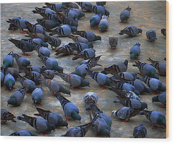 Pigeons Wood Print by Johnson Moya