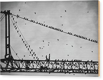 Pigeons Sitting On Building Crane And Flying Wood Print by Image by Ivo Berg (Crazy-Ivory)