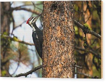 Pileated Woodpecker - Dryocopus Pileatus Wood Print by Merle Ann Loman