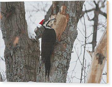 Pileated Woodpecker Wood Print by Carolyn Reinhart