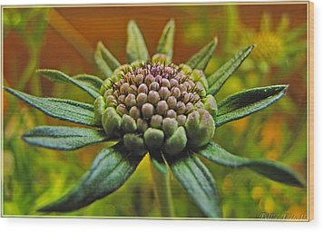 Wood Print featuring the photograph Pinchshin Bud by Debbie Portwood
