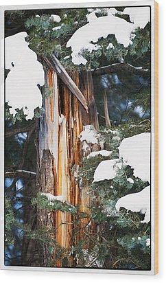 Pine Bark Wood Print by Lisa  Spencer