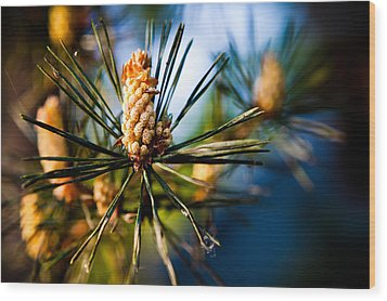 Pine Cone And Needles Wood Print