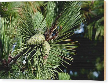Pine Cones In A Pine Tree Wood Print by Bill Cannon