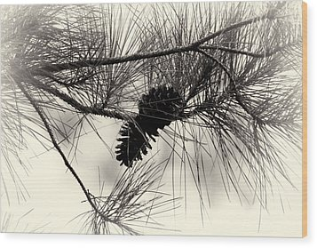 Pine Cones In The Treetops Wood Print by Douglas Barnard
