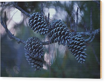 Pine Cones Wood Print by William Bartholomew