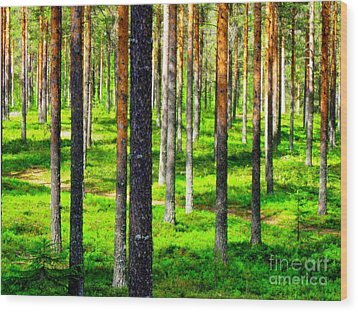 Pine Forest Wood Print by Pauli Hyvonen