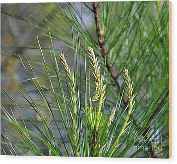 Pine Needles Wood Print by Al Powell Photography USA