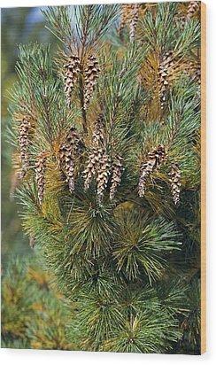 Pine (pinus Sp.) Wood Print by Dr Keith Wheeler