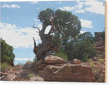 Pine Tree By The Canyon Wood Print by Dany Lison