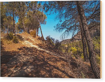 Pine Trees In El Chorro. Spain Wood Print by Jenny Rainbow