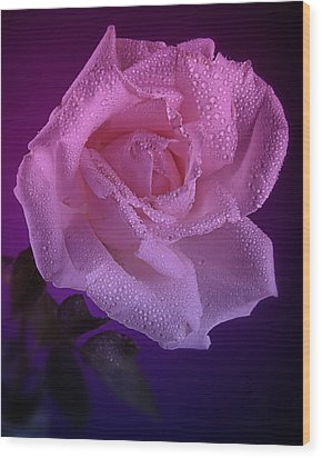 Pink And Blue Rose In The Rain Wood Print by M K  Miller