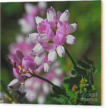 Wood Print featuring the photograph Pink And White by Cindy Manero