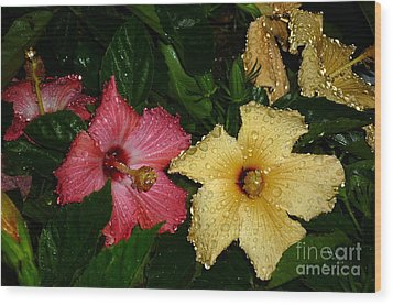 Wood Print featuring the photograph Pink And Yellow Hibiscus After The Rain by Renee Trenholm