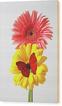 Pink And Yellow Mums Wood Print by Garry Gay