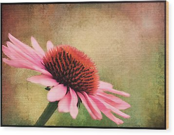 Pink Beauty Wood Print by Darren Fisher