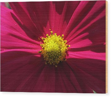 Wood Print featuring the photograph Pink Beauty by Tina M Wenger