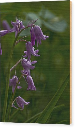 Wood Print featuring the photograph Pink Bluebell by Rob Hemphill