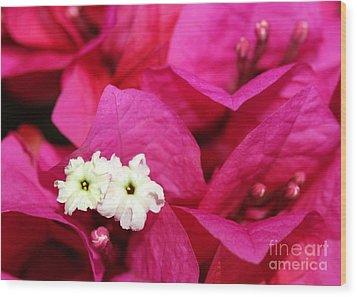 Pink Bouganvillea Wood Print by Sabrina L Ryan