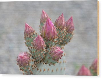 Pink Buds Wood Print by Linda Larson