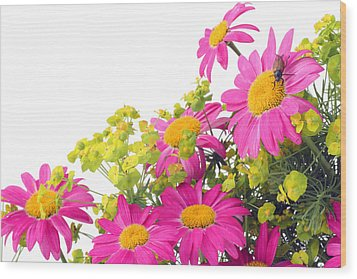 Wood Print featuring the photograph Pink Camomiles And Bug Card by Aleksandr Volkov