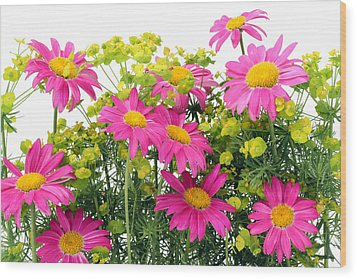 Wood Print featuring the photograph Pink Camomiles Background by Aleksandr Volkov