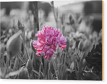 Pink Carnation Wood Print by Sumit Mehndiratta