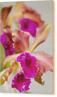 Pink Cattalaya Orchid Wood Print by Ron Dahlquist
