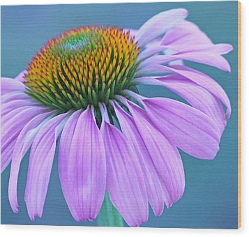 Pink Coneflower Wood Print by Becky Lodes