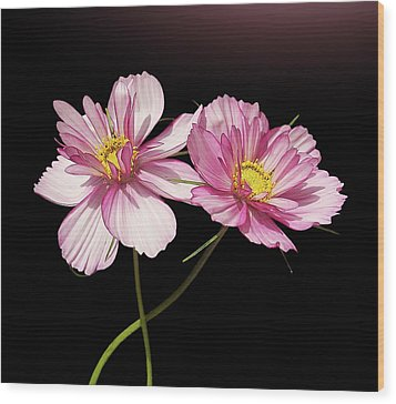 Pink Cosmos Flower Wood Print by Gitpix