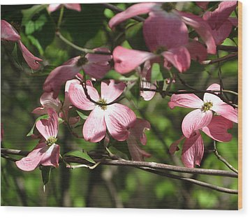 Pink Dogwood Tree Wood Print by Rebecca Overton