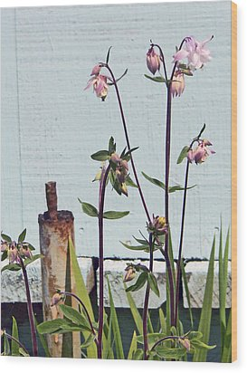 Pink Doves Wood Print by Pamela Patch
