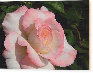Pink Edge Rose Wood Print