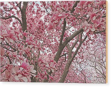 Pink Everywhere Wood Print by Becky Lodes