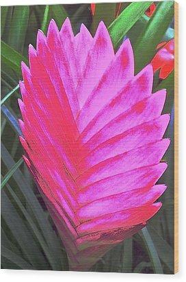 Pink Fan Wood Print by Paul Washington