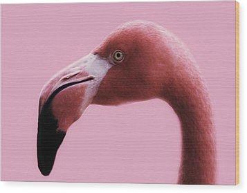 Pink Flamingo Wood Print by Paulette Thomas