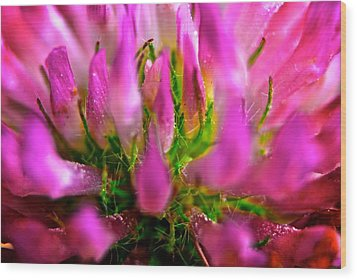 Pink Flower Wood Print by Andre Faubert