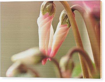 Pink Flower Bud Wood Print by Megurojin