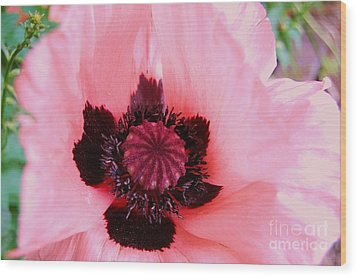 Wood Print featuring the photograph Pink Flower by Jasna Gopic