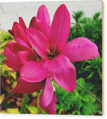 Pink Flower Wood Print by Joyce Woodhouse