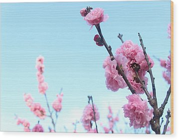 Pink Flowers Wood Print by Allen Jiang