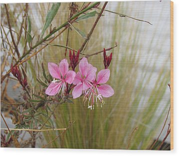 Wood Print featuring the photograph Pink Fountain - Guara by Bonnie Muir