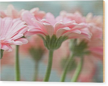 Pink Gerbera Daisies Wood Print by Mary Smyth