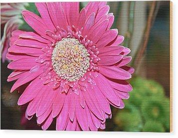 Pink Gerbera Daisy Wood Print by Ann Murphy